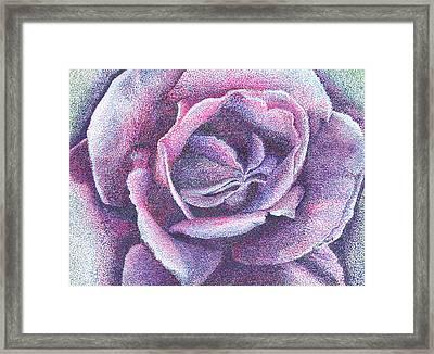 Purple Rose 2-14 Framed Print by William Killen