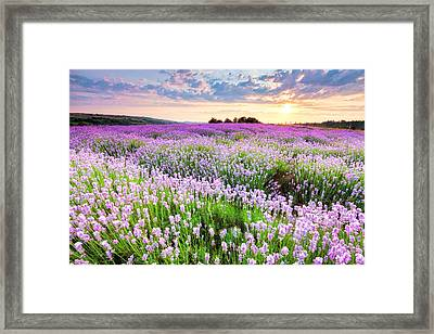 Purple Sea Framed Print by Evgeni Dinev