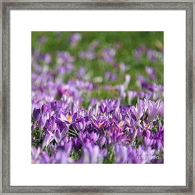 Purple Spring Framed Print by Karin Ubeleis-Jones