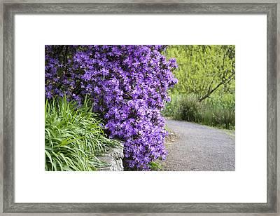 Purple Spring Framed Print by Priya Ghose