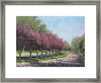 Purple Trees  Framed Print by Ylli Haruni