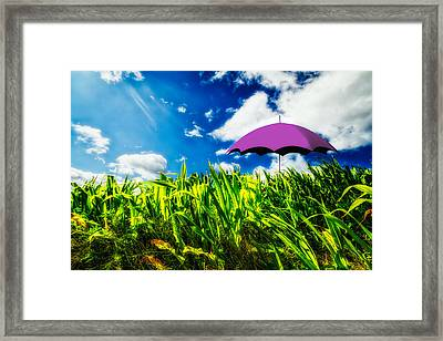 Purple Umbrella In A Field Of Corn Framed Print by Bob Orsillo