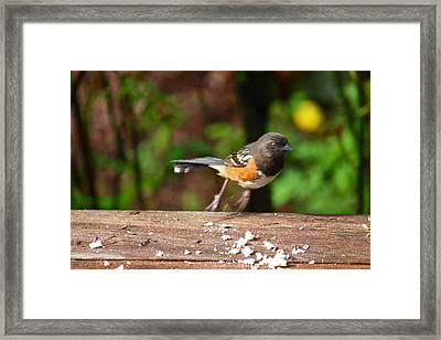 Push Off Before Take Off Framed Print by Kym Backland