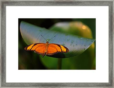 Push The Limits Framed Print by Vronja Photon