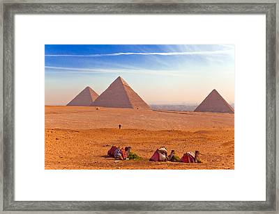 Pyramids And Camels Framed Print by Matthew Bamberg