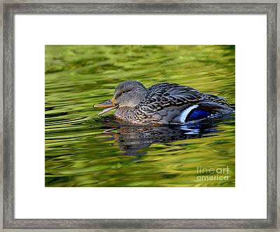 Quack Framed Print by Sharon Talson