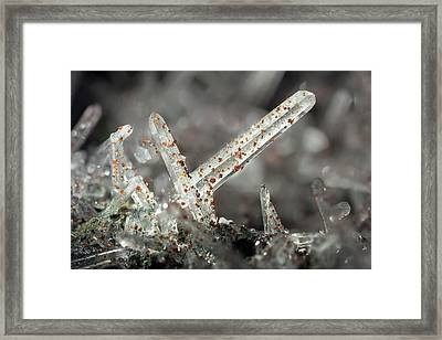 Quartz Needle Crystals Framed Print by Dr Juerg Alean