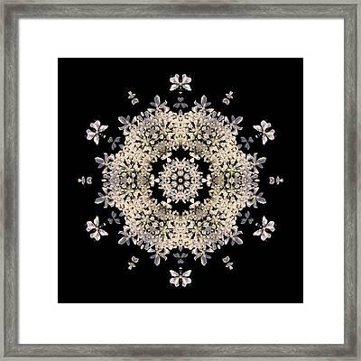 Queen Anne's Lace Flower Mandala Framed Print by David J Bookbinder