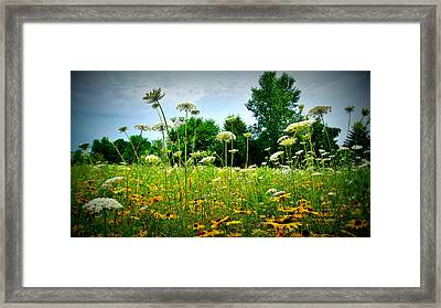 Queen Annes Lace Of The Butterfly Gardens Of Wisconsin Framed Print by Carol Toepke