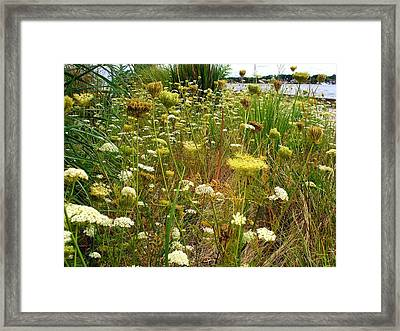 Queen Anne's  Lace Riverfront  Framed Print by Rick Todaro