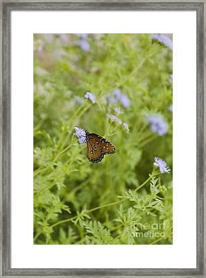 Queen Butterfly Framed Print by Richard and Ellen Thane