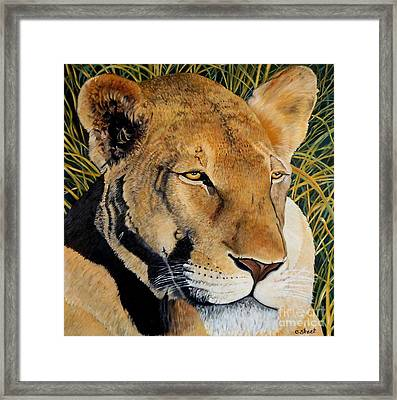 Queen Of The African Savannah Framed Print by Caroline Street