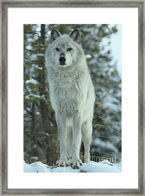 Queen Of The West Framed Print by Adam Jewell
