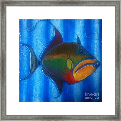 Queen Triggerfish  1 Framed Print by Chad Gill
