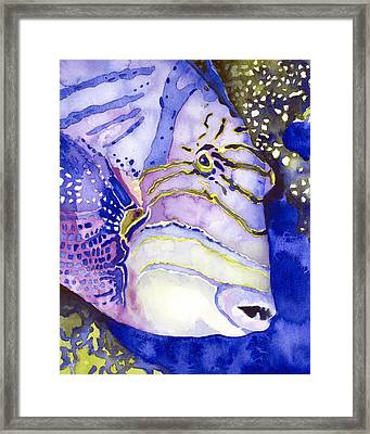 Queen Triggerfish Portrait Framed Print by Pauline Jacobson
