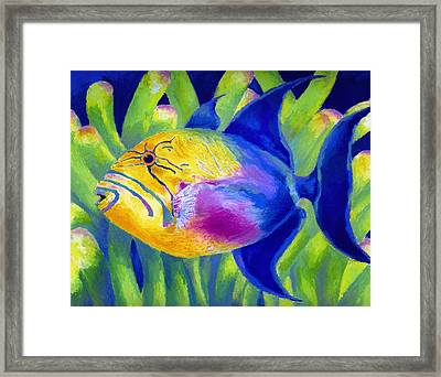 Queen Triggerfish Framed Print by Stephen Anderson