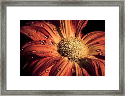 Quench Framed Print by Chris Austin