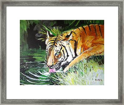 Quench Framed Print by Judy Kay