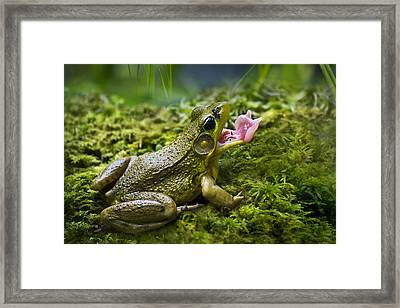 Quick And Deadly Framed Print by Christina Rollo