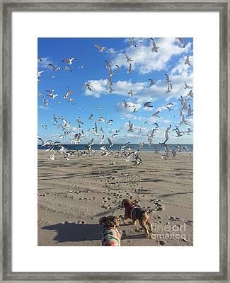 Quick Fly Away Framed Print by John Telfer
