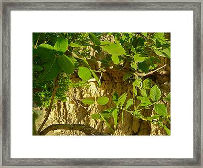 Quiet Framed Print by Floria Varnoos