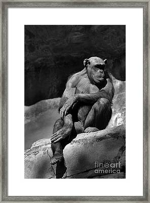 Quiet Time Framed Print by Dan Holm
