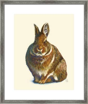 Rabbit Framed Print by Catherine Noel