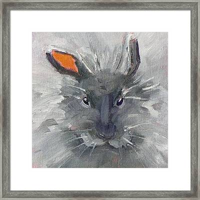 Rabbit Fluff Framed Print by Nancy Merkle