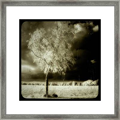 Rabbit In The Distant Shadows Framed Print by Gothicolors Donna