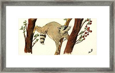 Raccoon On Tree Framed Print by Juan  Bosco