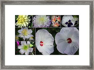Radiant In White Framed Print by Dora Sofia Caputo Photographic Art and Design
