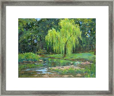 Radiant Willow Framed Print by Sandra Harris