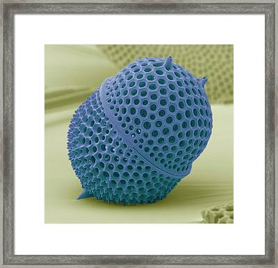 Radiolarian Framed Print by David Mccarthy