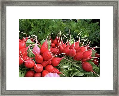 Radishes Framed Print by Charlette Miller