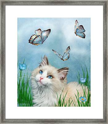 Ragdoll Kitty And Butterflies Framed Print by Carol Cavalaris