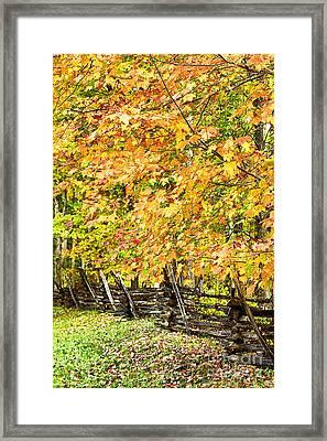 Rail Fence Fall Color Framed Print by Thomas R Fletcher