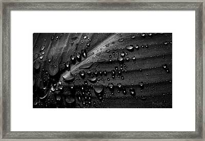 Rain Framed Print by Bob Orsillo