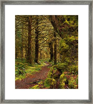 Rain Forest Path Framed Print by Leland D Howard