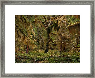 Rain Forest Texture Framed Print by Leland D Howard