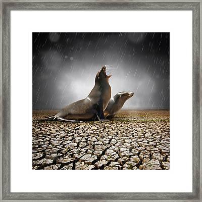 Rain Relief Framed Print by Carlos Caetano