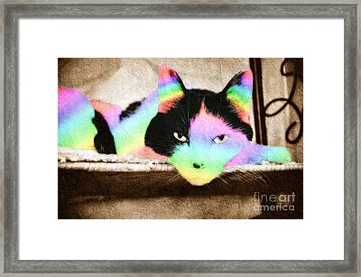 Rainbow Kitty Abstract Framed Print by Andee Design