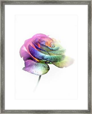 Rainbow Rose Framed Print by Marianna Mills