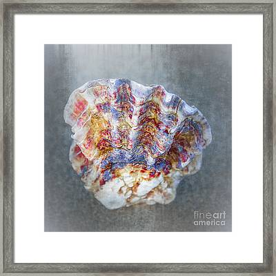 Rainbow Shell Framed Print by Svetlana Sewell