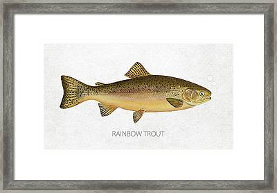 Rainbow Trout Framed Print by Aged Pixel