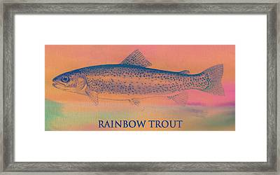 Rainbow Trout Framed Print by Dan Sproul