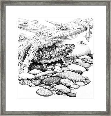 Rainbow Trout Pencil Study Framed Print by Jon Q Wright