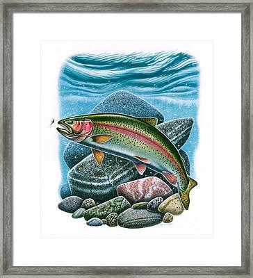 Rainbow Trout Vignette Framed Print by Jon Q Wright