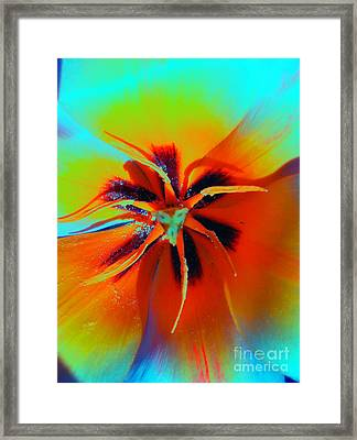 Rainbow Tulip Framed Print by Dasha Masha