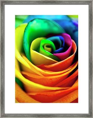 Rainbowed Rose Framed Print by Ian Gowland