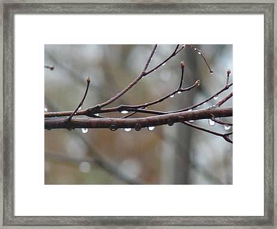 Raindrops Framed Print by Arielle Cunnea